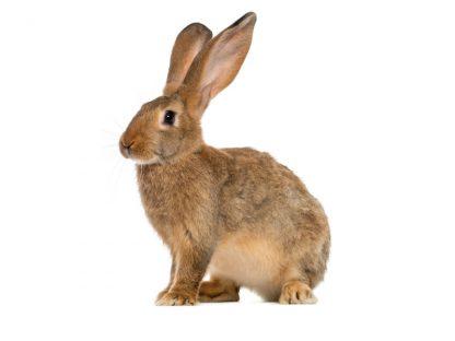 Regali solidali coniglio