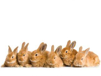 Regali solidali coniglietti